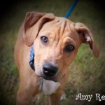 Adoptable (Official) Georgia Dogs for September 22, 2017