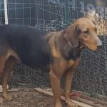 Adoptable (Official) Georgia Dogs for September 25, 2017