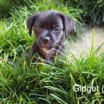 Adoptable (Official) Georgia Dogs for September 26, 2017