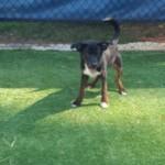 Adoptable (Official) Georgia Dogs for September 15, 2017