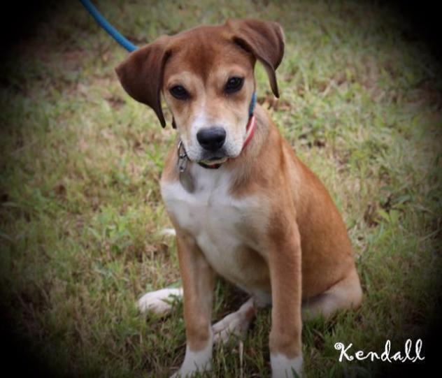 KendallSAP