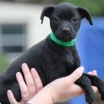 Adoptable (Official) Georgia Dogs for September 5, 2017