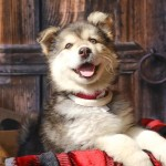 Adoptable (Official) Georgia Dogs for September 21, 2017
