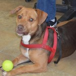Adoptable (Official) Georgia Dogs for October 26, 2017