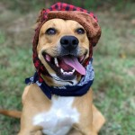 Adoptable (Official) Georgia Dogs for October 25, 2017