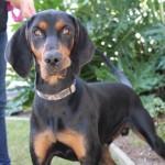 Adoptable (Official) Georgia Dogs for November 10, 2017