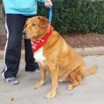 Adoptable (Official) Georgia Dogs for November 28, 2017