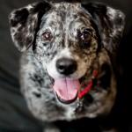 Adoptable (Official) Georgia Dogs for November 29, 2017