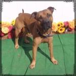 Adoptable (Official) Georgia Dogs for November 6, 2017