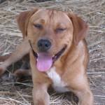 Adoptable (Official) Georgia Dogs for November 16, 2017