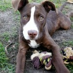 Adoptable (Official) Georgia Dogs for November 30, 2017