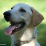 Adoptable (Official) Georgia Dogs for November 9, 2017