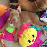 Adoptable (Official) Georgia Dogs for November 20, 207