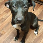 Adoptable (Official) Georgia Dogs for December 21, 2017