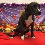Adoptable (Official) Georgia Dogs for December 4, 2017