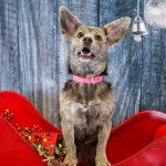 Adoptable (Official) Georgia Dogs for December 12, 2017