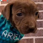 Adoptable (Official) Georgia Dogs for January 31, 2018