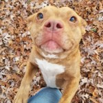 Adoptable (Official) Georgia Dogs for January 19, 2018