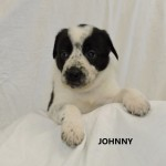 Adoptable (Official) Georgia Dogs for January 3, 2018