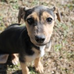 Adoptable (Official) Georgia Dogs for February 12, 2018
