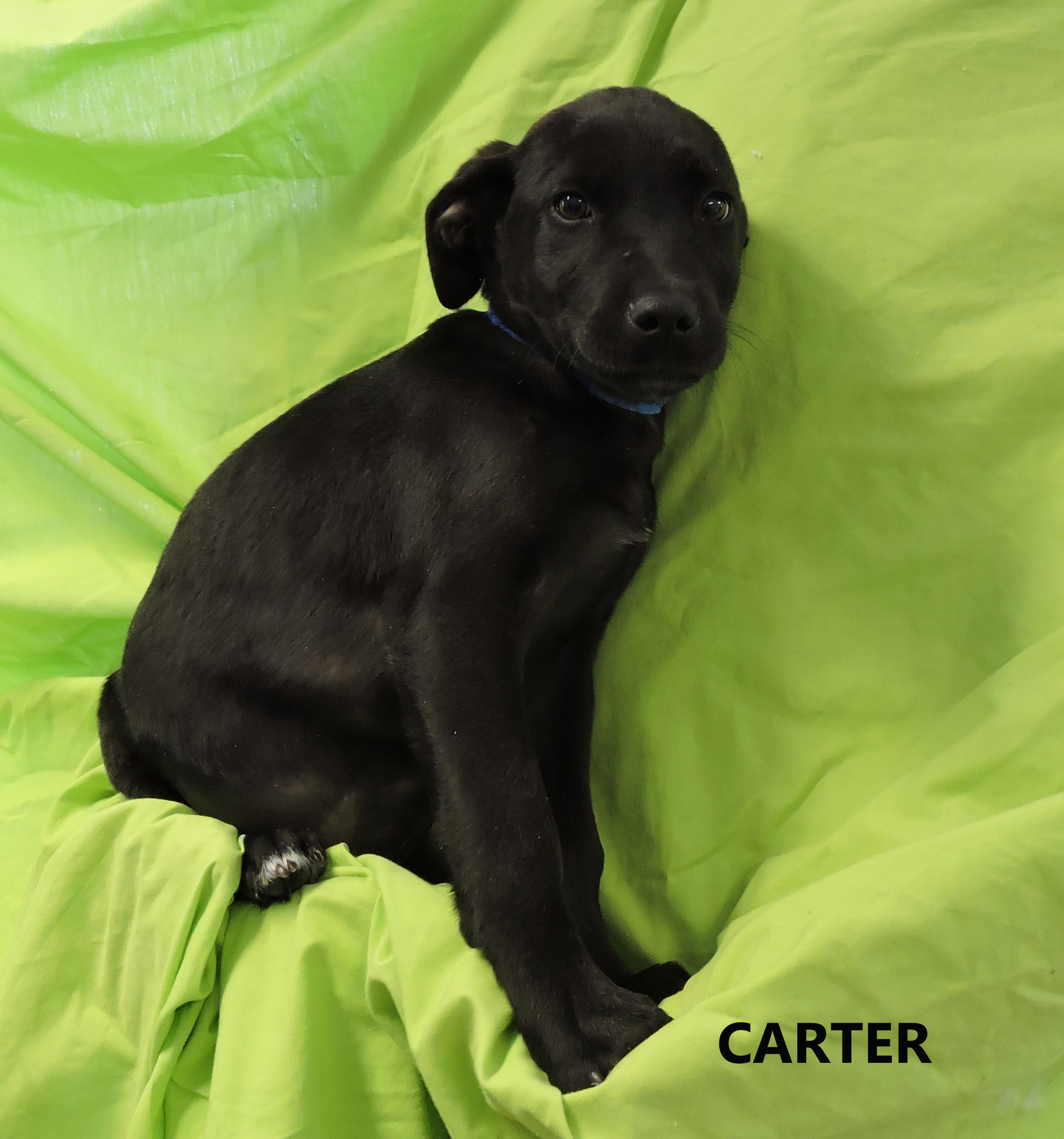 Carter WW