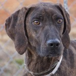 Adoptable (Official) Georgia Dogs for February 14, 2018
