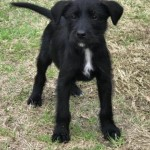 Adoptable (Official) Georgia Dogs for February 26, 2018