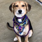 Adoptable (Official) Georgia Dogs for February 16, 2018