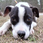 Adoptable (Official) Georgia Dogs for February 27, 2018