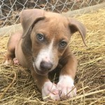 Adoptable (Official) Georgia Dogs for March 6, 2018