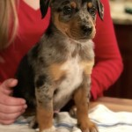 Adoptable (Official) Georgia Dogs for March 2, 2018