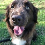 Adoptable (Official) Georgia Dogs for March 14, 2018