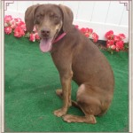Adoptable (Official) Georgia Dogs for April 9, 2018