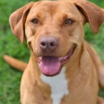 Adoptable (Official) Georgia Dogs for April 18, 2018