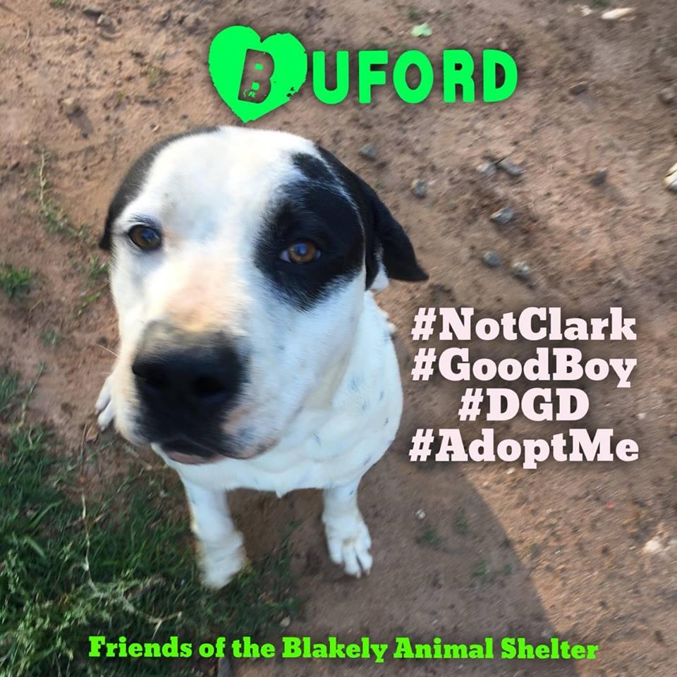 Buford Blakely