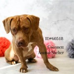 Adoptable (Official) Georgia Dogs for April 2, 2018