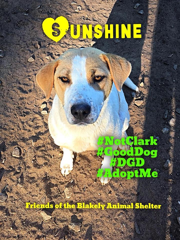 Sunshine Blakely
