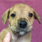 Adoptable (Official) Georgia Dogs for May 7, 2018