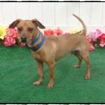 Adoptable (Official) Georgia Dogs for May 1, 2018
