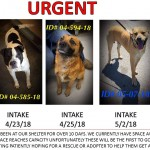Adoptable (Official) Georgia Dogs for May 15, 2018