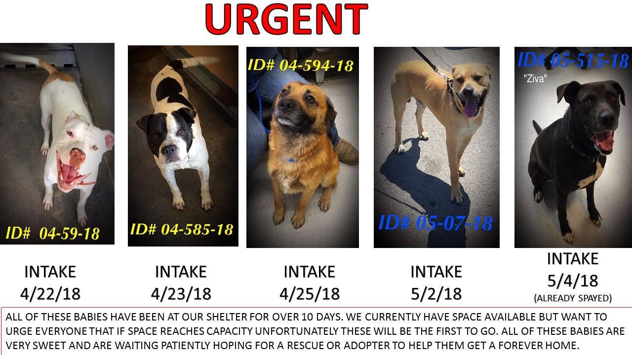 Whitfield Urgent