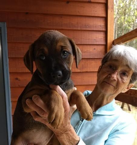 Ebony Pup Astrid