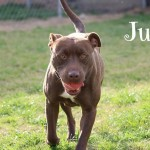 Adoptable (Official) Georgia Dogs for June 14, 2018