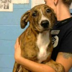 Adoptable (Official) Georgia Dogs for June 21, 2018
