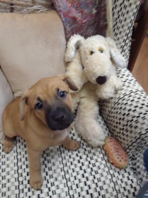 Tricksy Pup