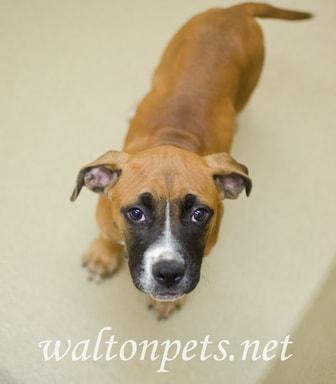 Walton Pup Pup