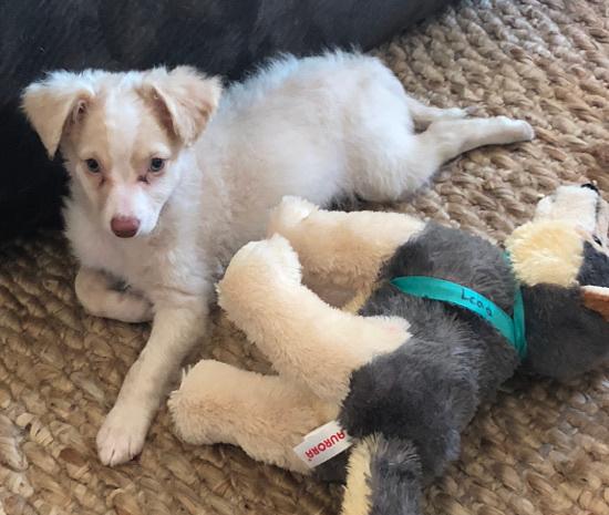 Wrigley Puppy