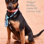 Adoptable (Official) Georgia Dogs for July 23, 2018