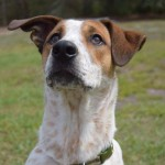Adoptable (Official) Georgia Dogs for July 2, 2018