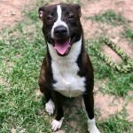 Adoptable (Official) Georgia Dogs for July 31, 2018